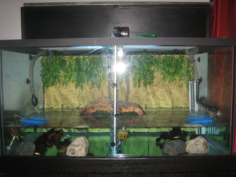 My 150 gallon pet turtle tank as first set up