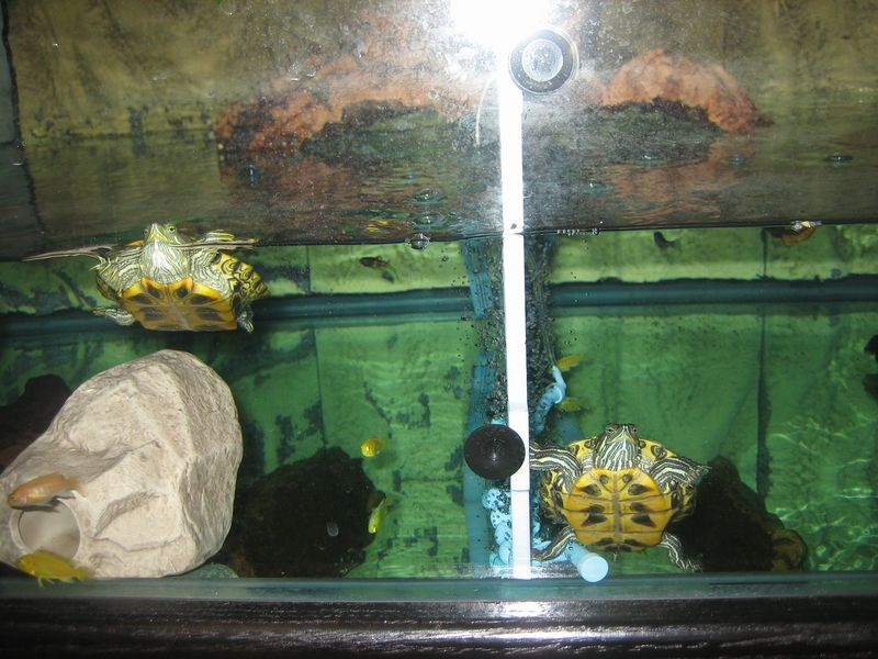 pet turtle tank - group picture, image by tag - keywordpictures.com