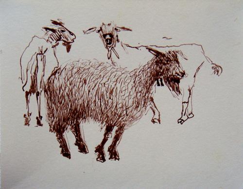 Goat Nr1-