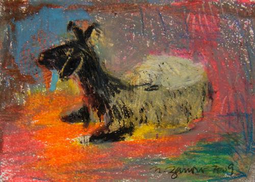 Goat Nr17