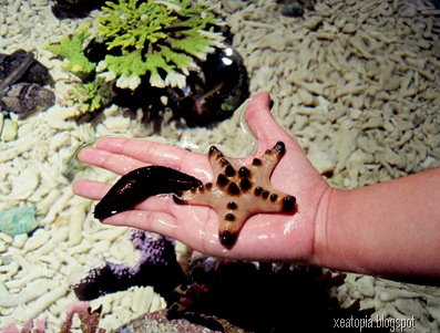 aquaria 036