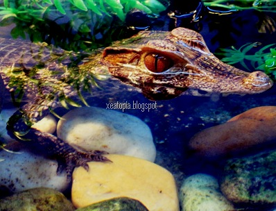 aquaria 055