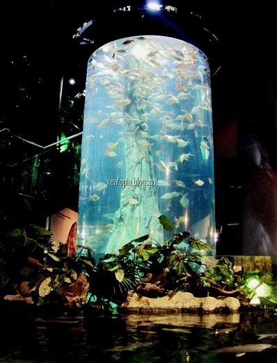 aquaria 086