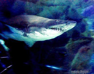 aquaria 126