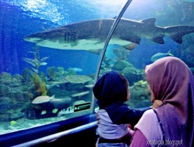 aquaria 146