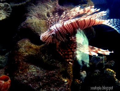 aquaria 161