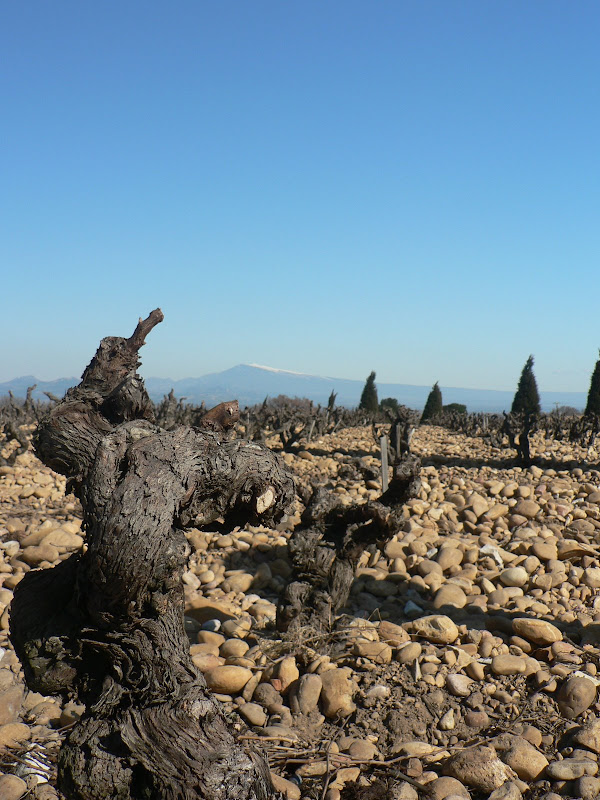 Rocky terrain of Chateauneuf-du-pape