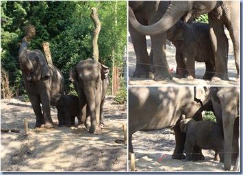 olifanten 24-05-2010
