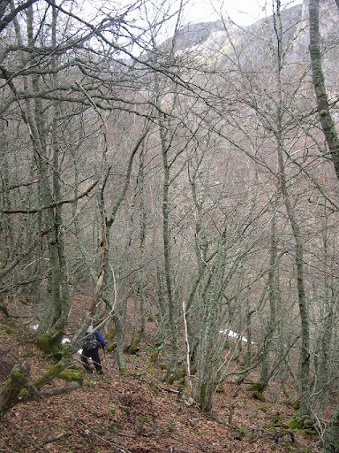 """bosque"""