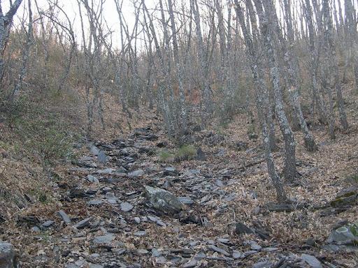 Bosque de Robles en Peñas Bernardas
