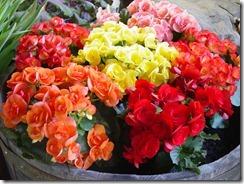 Kautzflowers 022