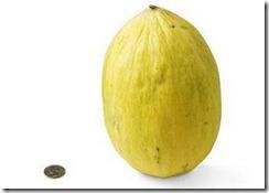 36-crenshaw-melon