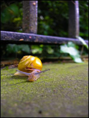 Escargot en photo macro