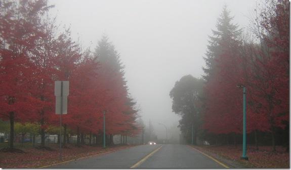 fall 016
