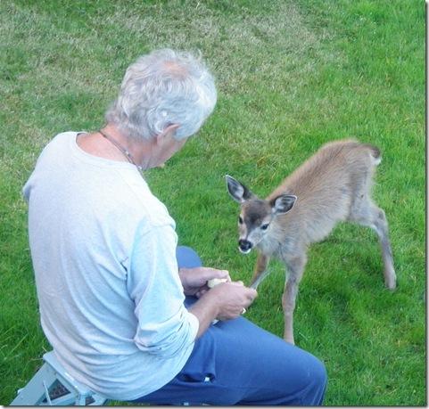 Heathers deer 169