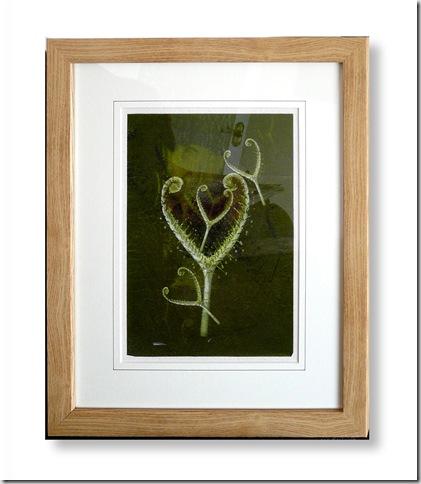 framed rainforest shadow
