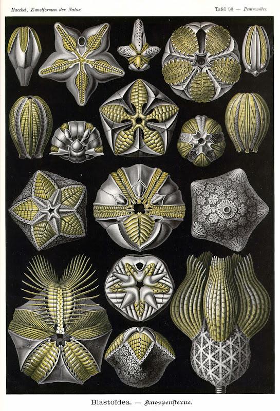 Kunst-Formen der Natur, by Ernst Haeckel