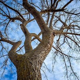 Grow by Nick Neben - Nature Up Close Trees & Bushes ( tree, blue, grow, nikon, nebraska )