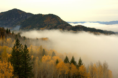 Photo of Aspen and Ponderosa Pine in the Fall