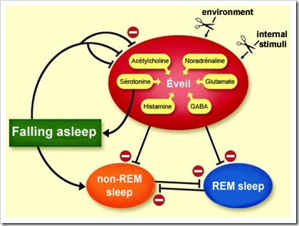 The Neuronal Switches for Waking and Sleeping