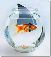 Goldfish_with_shark_fin