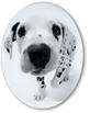 Oval Dog