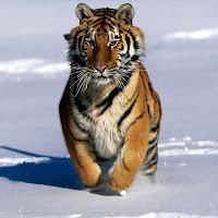 Correndo na neve para reforçar a musculatura