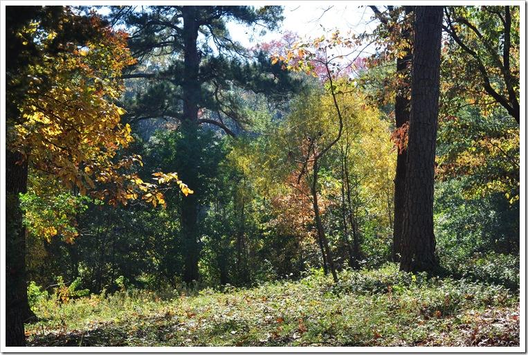 Fall pics-deer 028