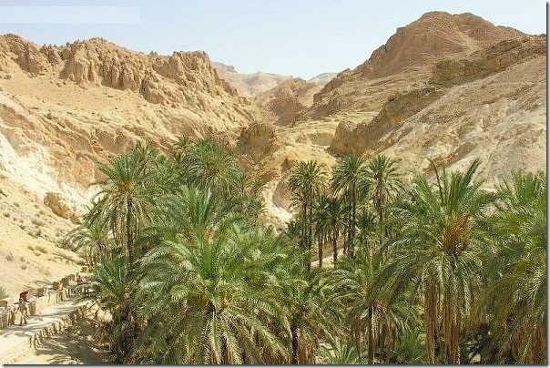 20 most incredible desert oasis16