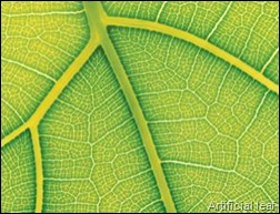 Biomimicry scientists make artificial leaf to split water and generate hydrogen with light