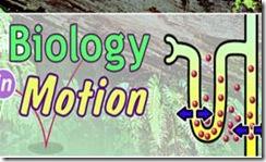 http://lh4.ggpht.com/_kzdejIxTZLw/Ss2-3RhFQOI/AAAAAAAAAzs/b1GPAgOf2mo/clip_image004_thumb1.jpg