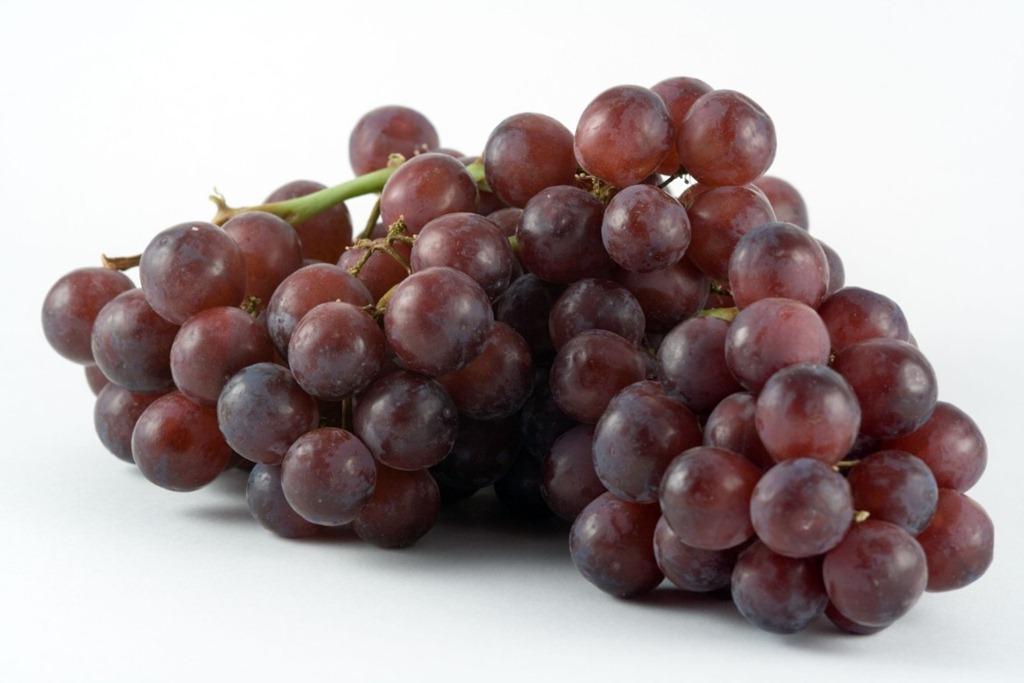[grapes18[3].jpg]