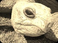 tortoise_400