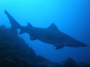 tiburon_toro_las_eras03-01-09.jpg