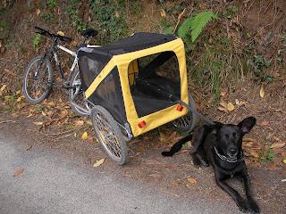 El carro para perros !!