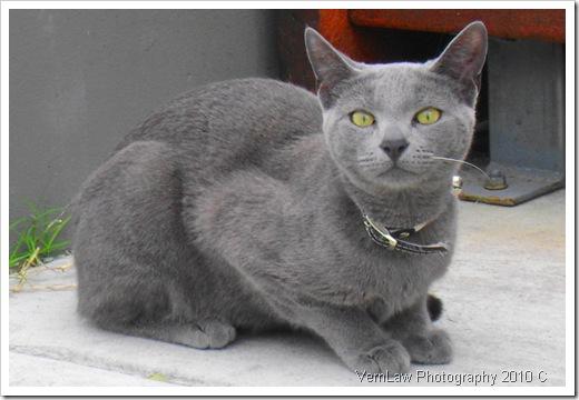 KittenDSC01983(1)