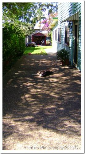 DogSleepingDSC01580(1)