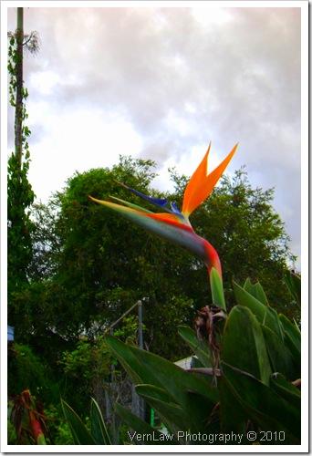 BirdsParaDSC02192(1)