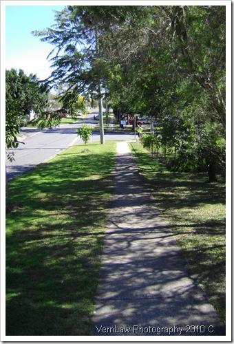 TreeShadeDSC01688(1)