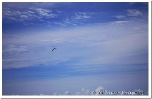BirdSky209(1)