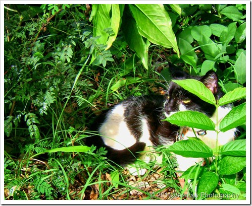 Catsettlesdsco2595