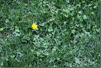 weeds 097