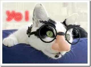 gatos- optimizado (313)