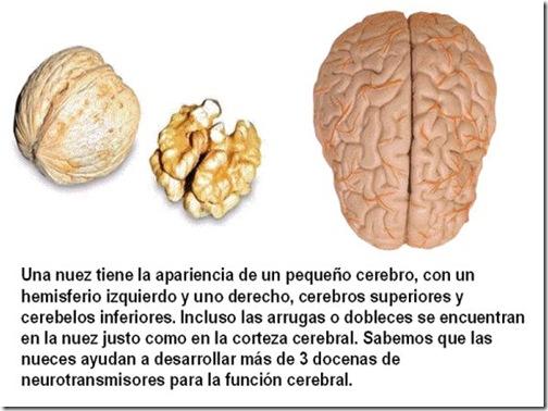 frutas 04