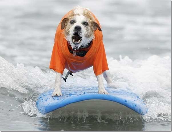 perros surf migallinero (1)