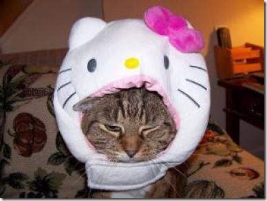 perro hello kitty migallinero.blogspot. com(3)