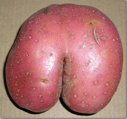 patata-culo