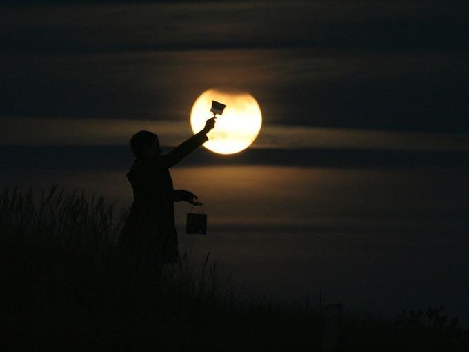 luna - mi gallinero (4)