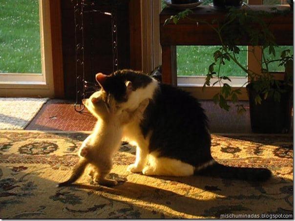 gatos migallinero (1)