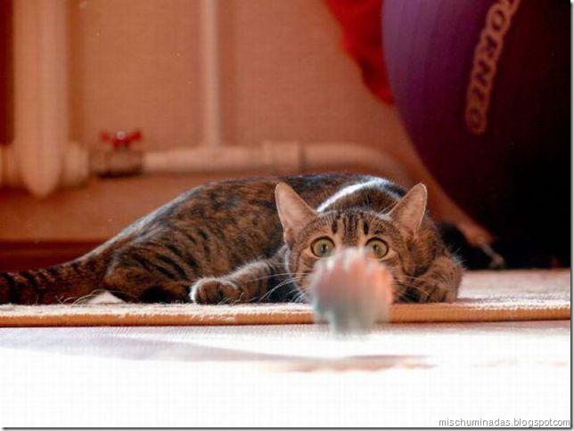 gatos migallinero (20)